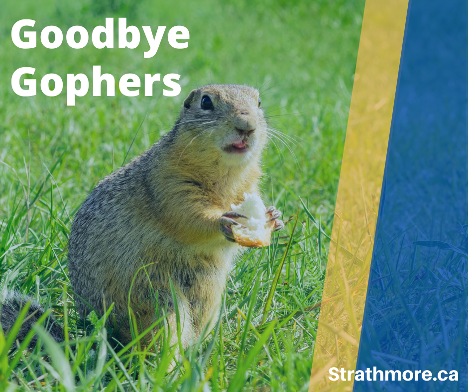 Gopher in green grass with text overlaid